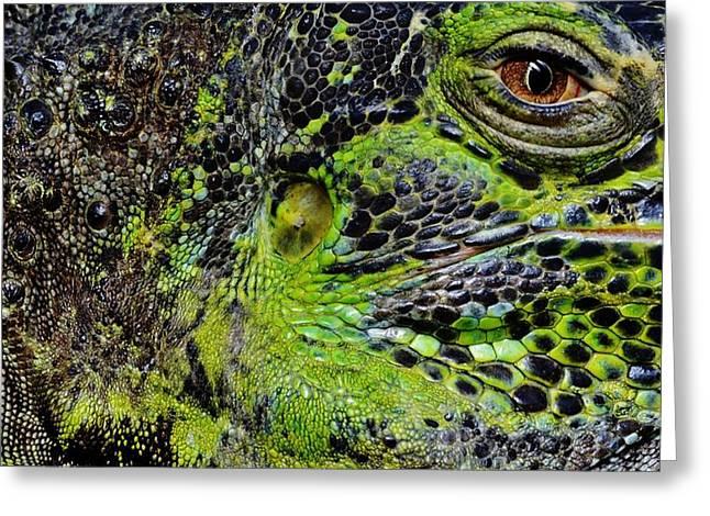 Details Iguana Greeting Card
