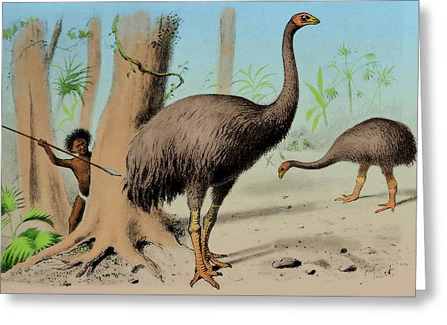 Dinornis, Giant Moa, Cenozoic Bird Greeting Card by Science Source