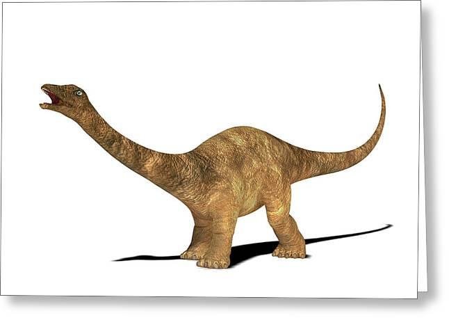 Diplodocus Dinosaur Greeting Card by Friedrich Saurer