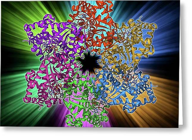 Dna Helicase Molecule Greeting Card by Laguna Design