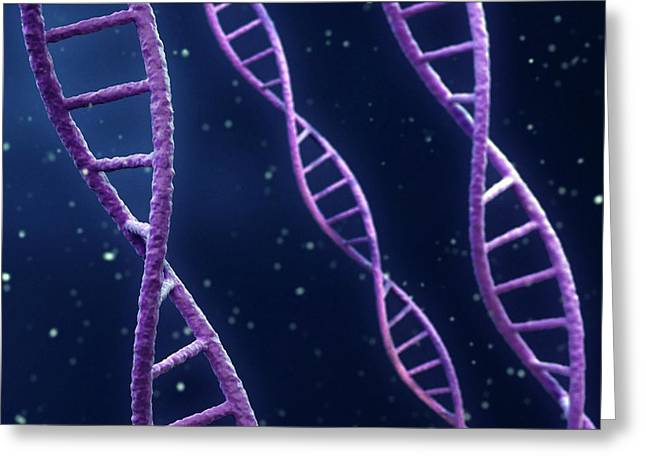 Dna Strands Greeting Card by Maurizio De Angelis/science Photo Library