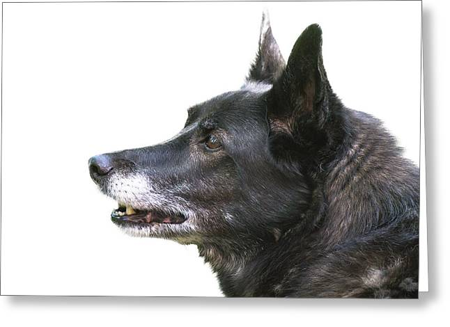 Dog Head Profile Isolated On White Greeting Card by Donald  Erickson