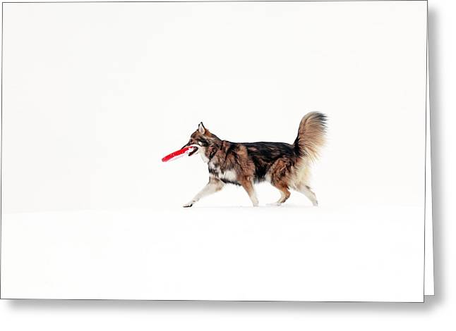 Dog In The Snow Greeting Card