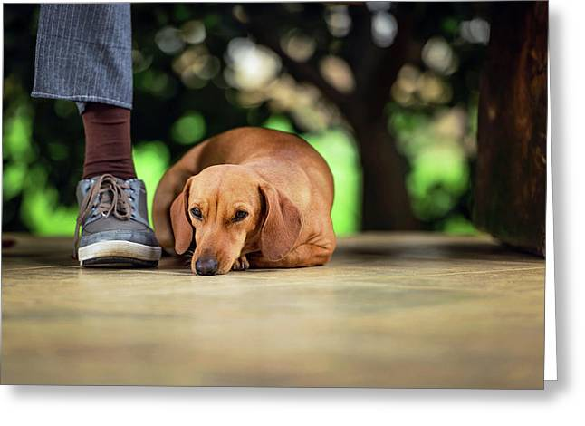 Dog Lying On Floor Under Table Greeting Card by Ktsdesign
