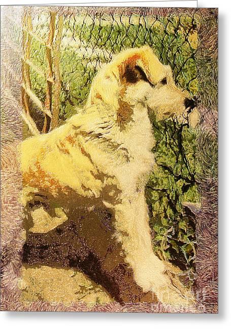 Dog Portrait Greeting Card by Odon Czintos