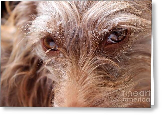 Dog Stare Greeting Card