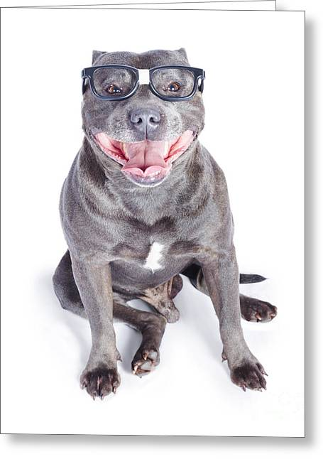 Dog Wearing Nerd Glasses Greeting Card by Jorgo Photography - Wall Art Gallery