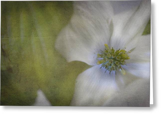 Dogwood Greeting Card by Cindy Rubin