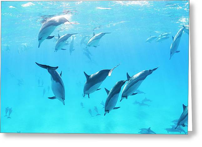 Dolphins Swimming In The Ocean, Amazing Greeting Card by Design Pics Vibe