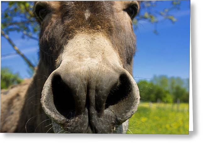 Donkey Greeting Card by Bernard Jaubert