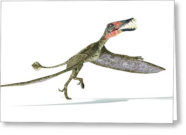Dorygnathus Dinosaur Greeting Card