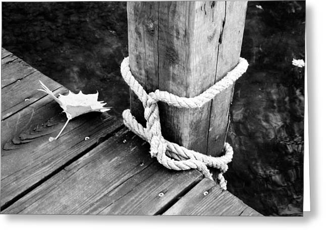 Down On The Dock Greeting Card by Amy Lingle