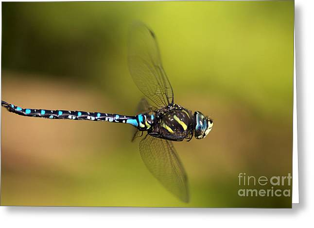 Dragonfly Greeting Card by Sharon Talson