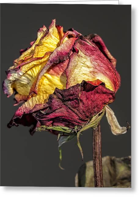 Dried Rose Still Life Greeting Card
