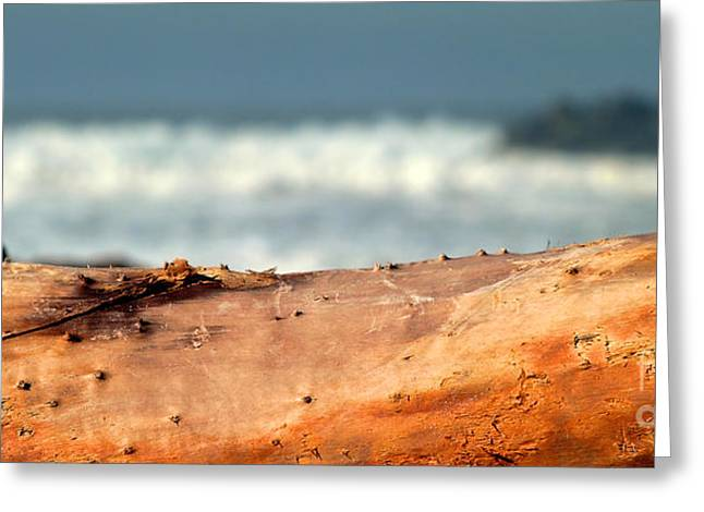Drift Wood Greeting Card by Henrik Lehnerer