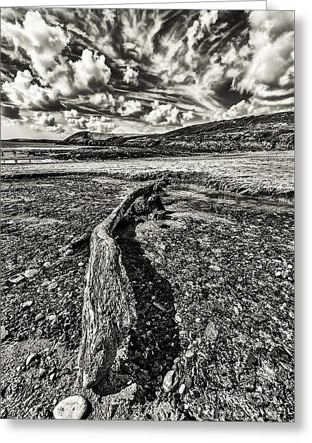 Driftwood Mono Greeting Card by Steve Purnell