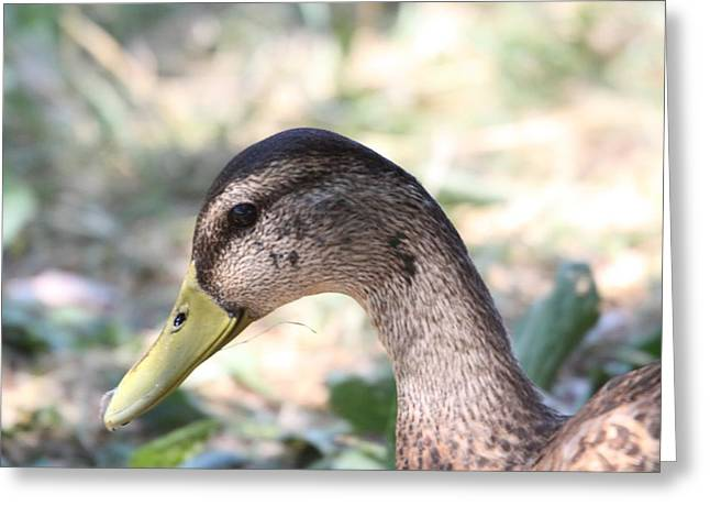 Duck - Animal - 011314 Greeting Card by DC Photographer