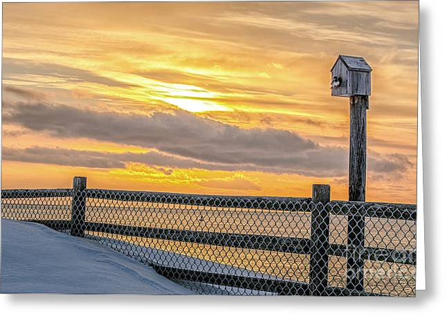 Early Bird Greeting Card by Scott Thorp
