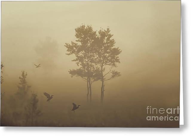 Early Morning Canaan Valley Greeting Card by Dan Friend