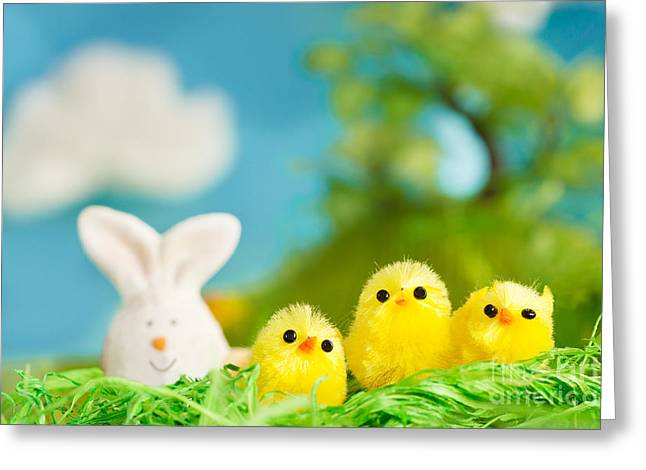 Easter Chicks Greeting Card by Mythja  Photography