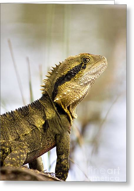 Eastern Water Dragon Greeting Card by Jorgo Photography - Wall Art Gallery