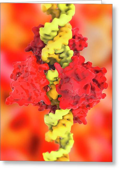 Ebola Viral Protein 35 And Rna Greeting Card by Ramon Andrade 3dciencia