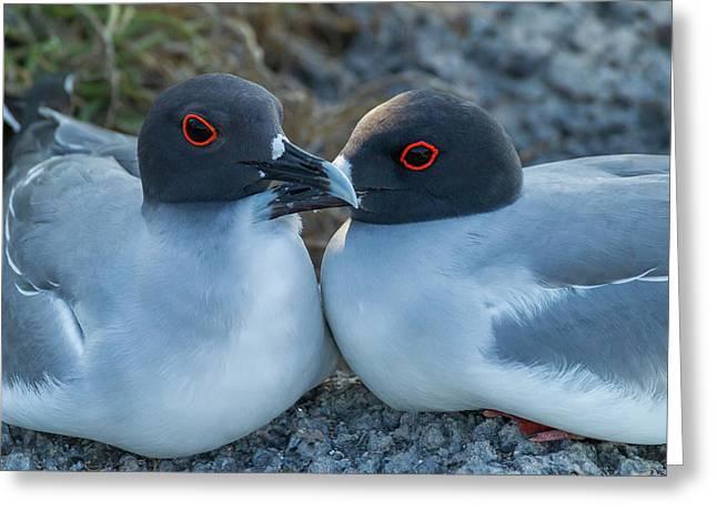 Ecuador, Galapagos National Park Greeting Card by Jaynes Gallery