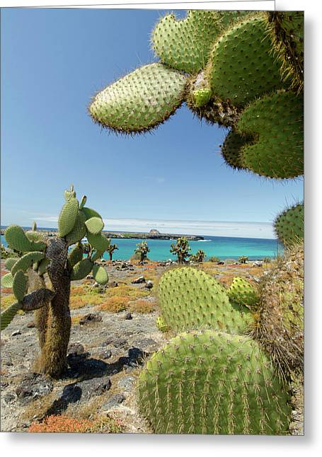 Ecuador, Galapagos, South Plaza Island Greeting Card