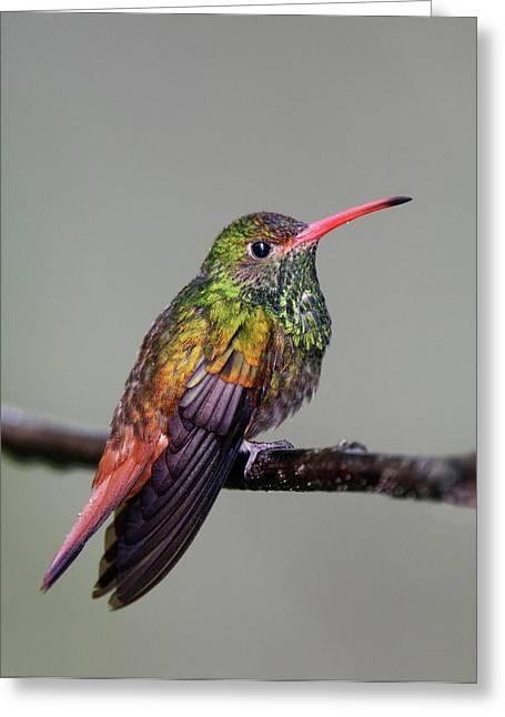 Ecuador, Tandayapa Bird Lodge Greeting Card