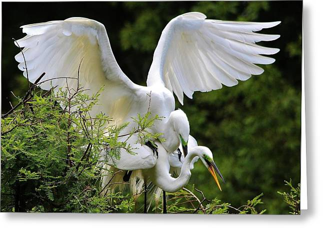 Egret Love Greeting Card by Paulette Thomas