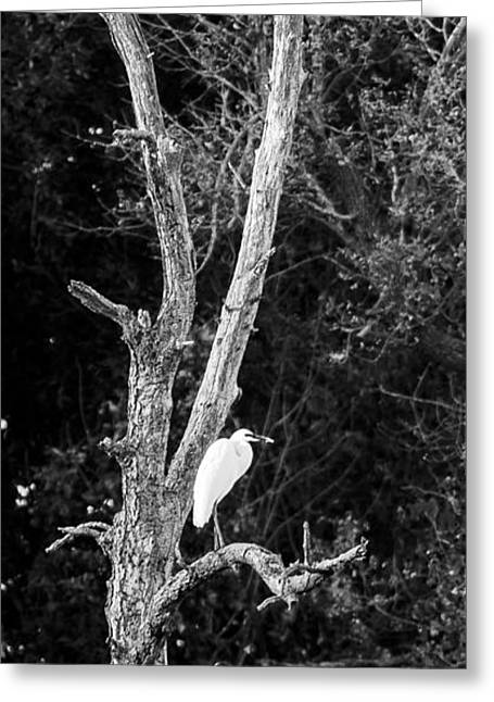 Egret Greeting Card by Steven Ralser