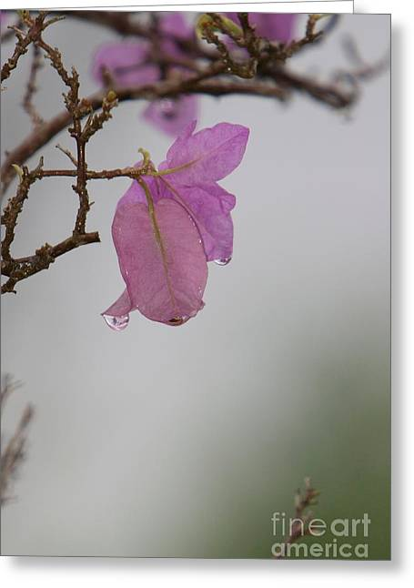 Elegance Of Nature Greeting Card