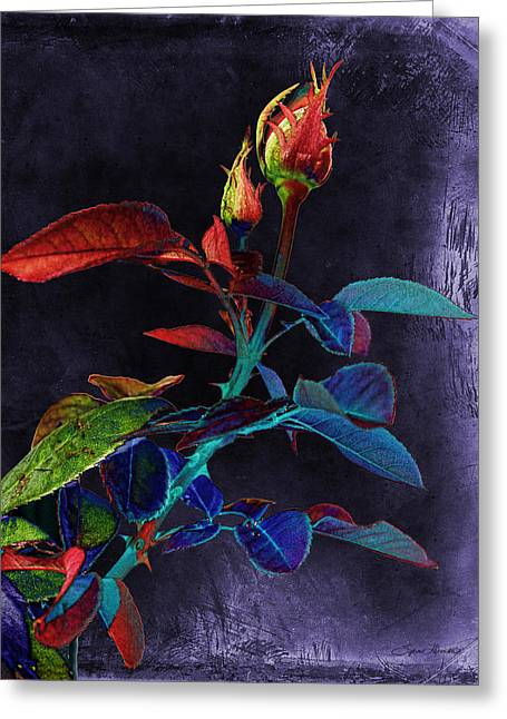 Elegance Greeting Card by Sylvia Thornton