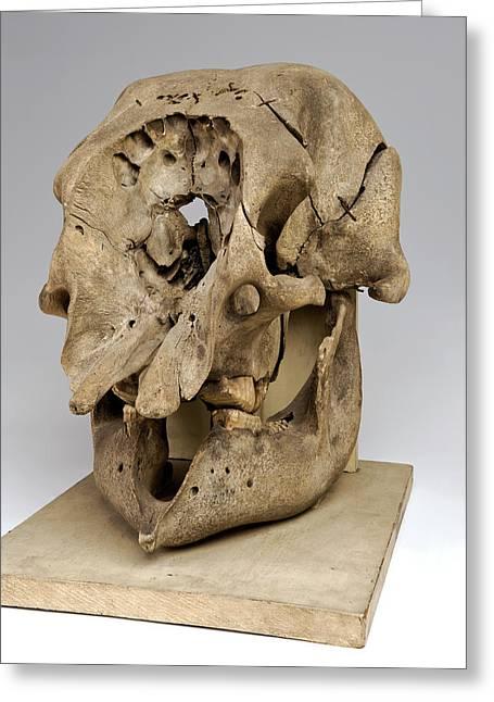 Elephant Skull Greeting Card