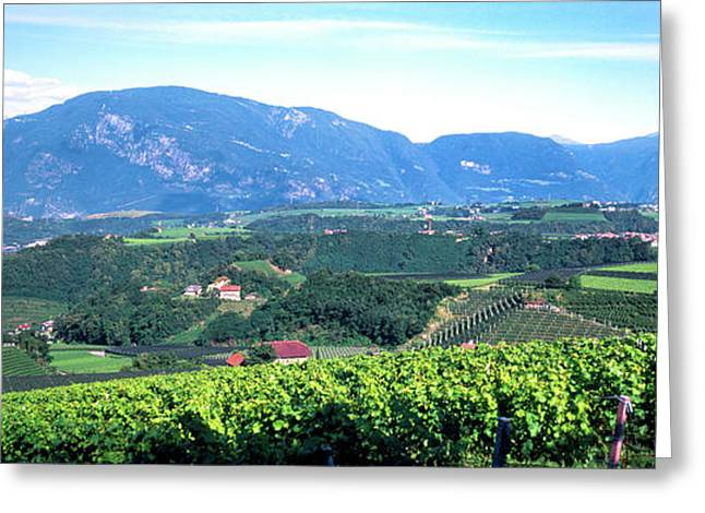 Elevated View Of Houses And Vineyard Greeting Card by Panoramic Images