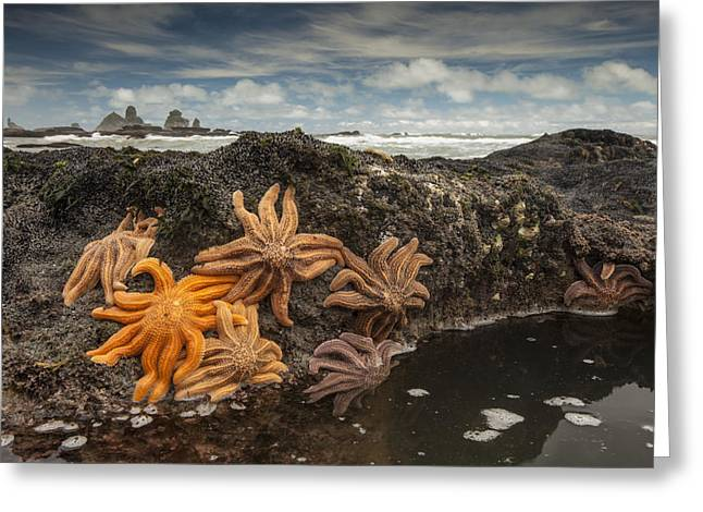 Eleven-armed Sea Stars At Low Tide Greeting Card by Colin Monteath
