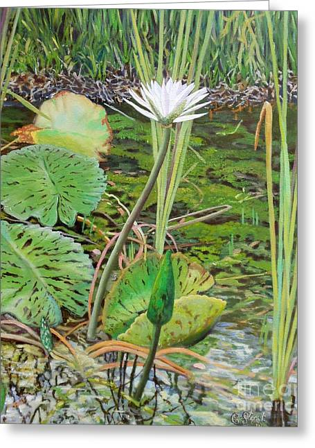 Emerald Lily Pond Greeting Card by Caroline Street