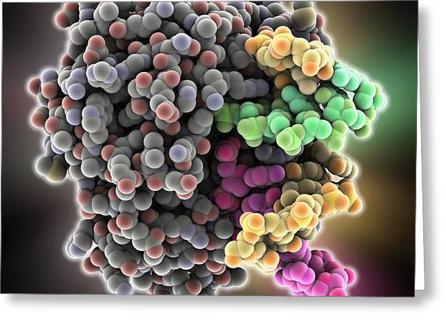 Endonuclease Iv Molecule Greeting Card by Science Photo Library
