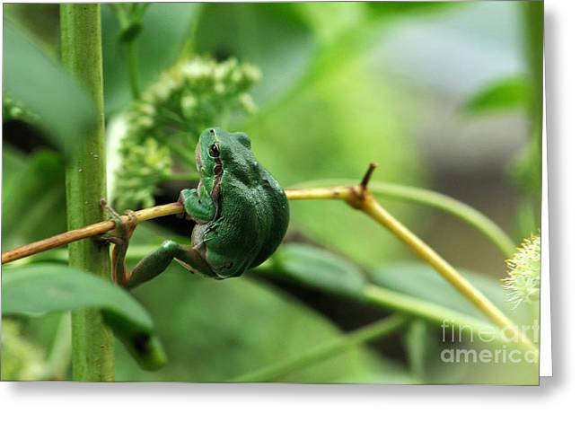 European Treefrog Greeting Card by Reiner Bernhardt