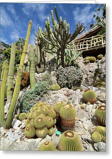 Exotic Garden Greeting Card by Chris Hellier
