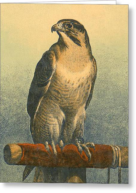 Falcon Greeting Card by Sir Edwin Landseer