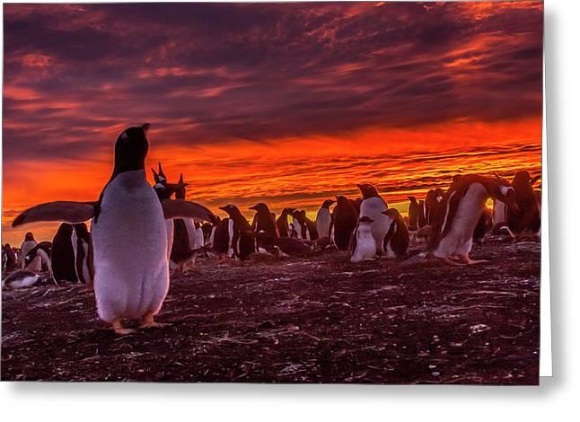 Falkland Islands, Sea Lion Island Greeting Card