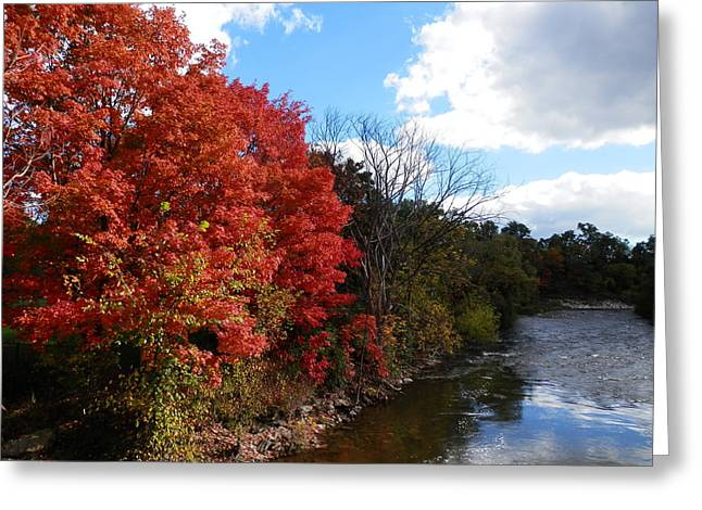 Fall At The Credit River Greeting Card