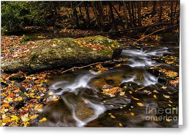 Fall Color Straight Creek Greeting Card by Thomas R Fletcher