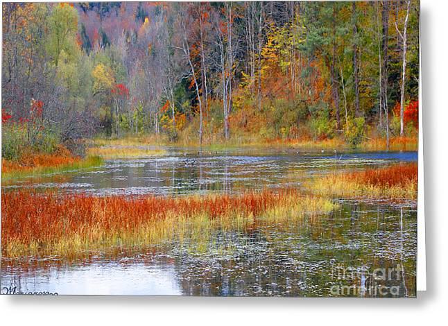 Fall Colors Greeting Card by Mariarosa Rockefeller