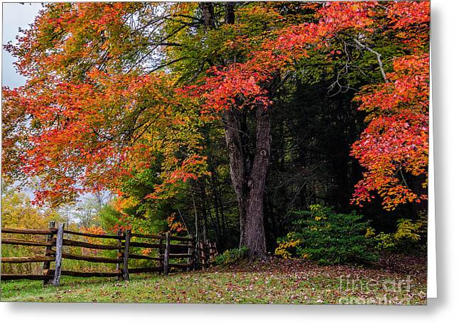 Fall Maple Greeting Card by Anthony Heflin