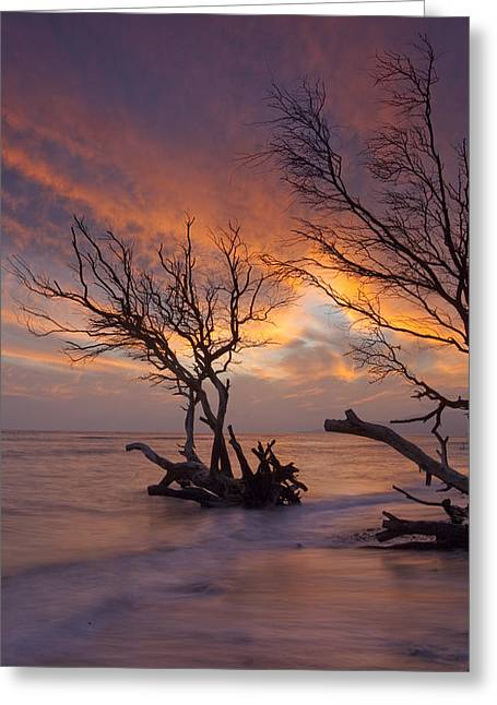 Fallen Trees Greeting Card by James Roemmling