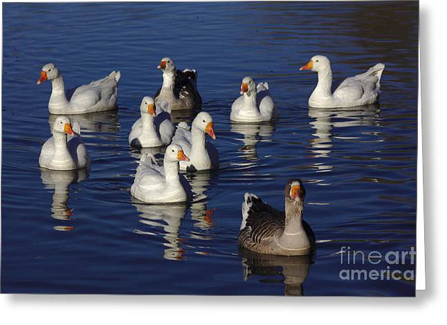 Family Goose Greeting Card