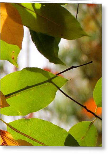 Famous Fall 9 Greeting Card by France Laliberte