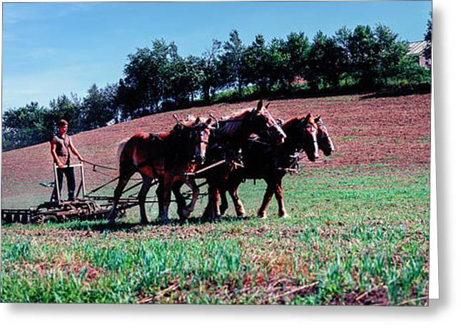 Farmer Plowing Field With Horses, Amish Greeting Card